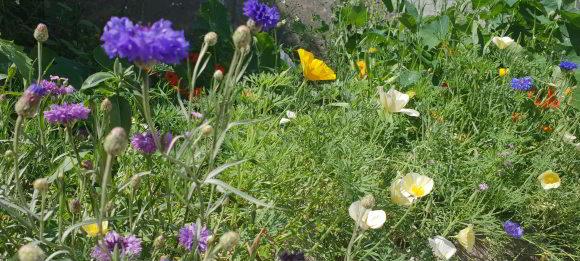 Blumenmischung La Fleur Chrono