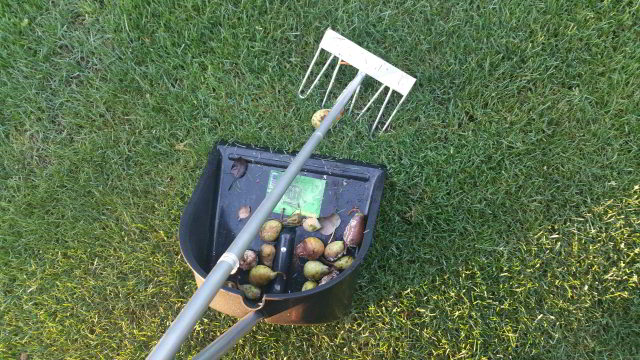 Herbstrasenpflege - Absammeln von Laub