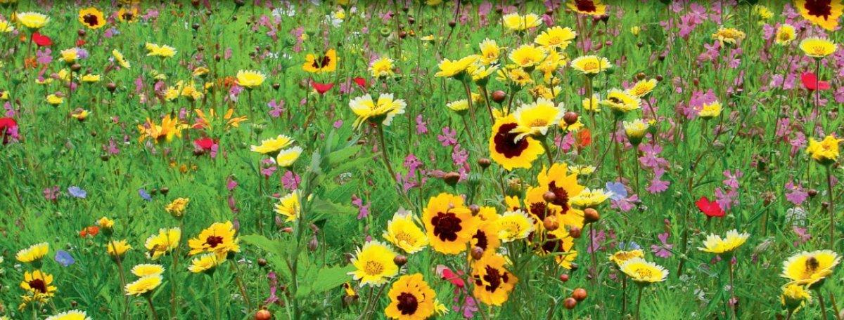 LaFleur sec Blumenmischung trockene Standorte