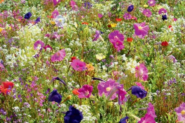Blumenmischung LaFleur mini