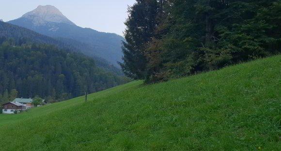 Dauerwiese - Weidenmischung
