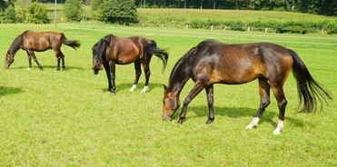 Kraeuterzusatzmischung - Pferdeapotheke
