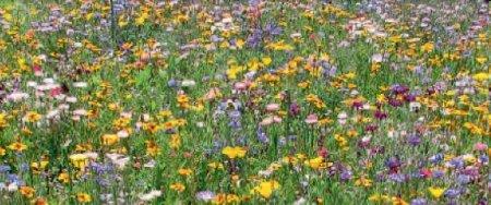 LaFleur petit Blumensamen