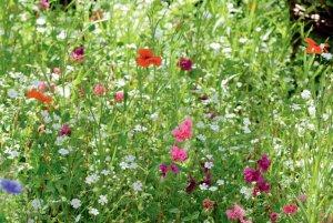 LaFleur demi Ombre Blumenmischung