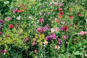 LaFleur baroque Blumenmischung