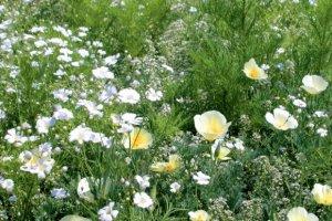 LaFleur bouquet blanc