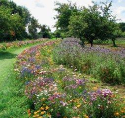 Blumenmischung LaFleur chrono