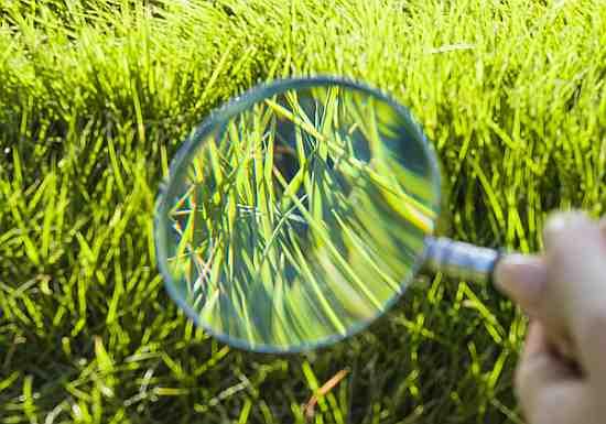 Rasenpflege im Frühjahr und Frühling