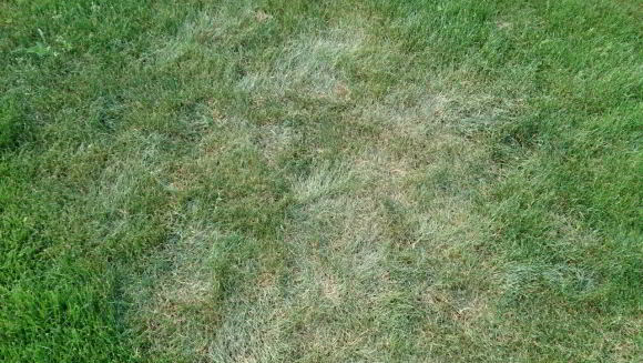 Rasen Beregnen Und Bewässern